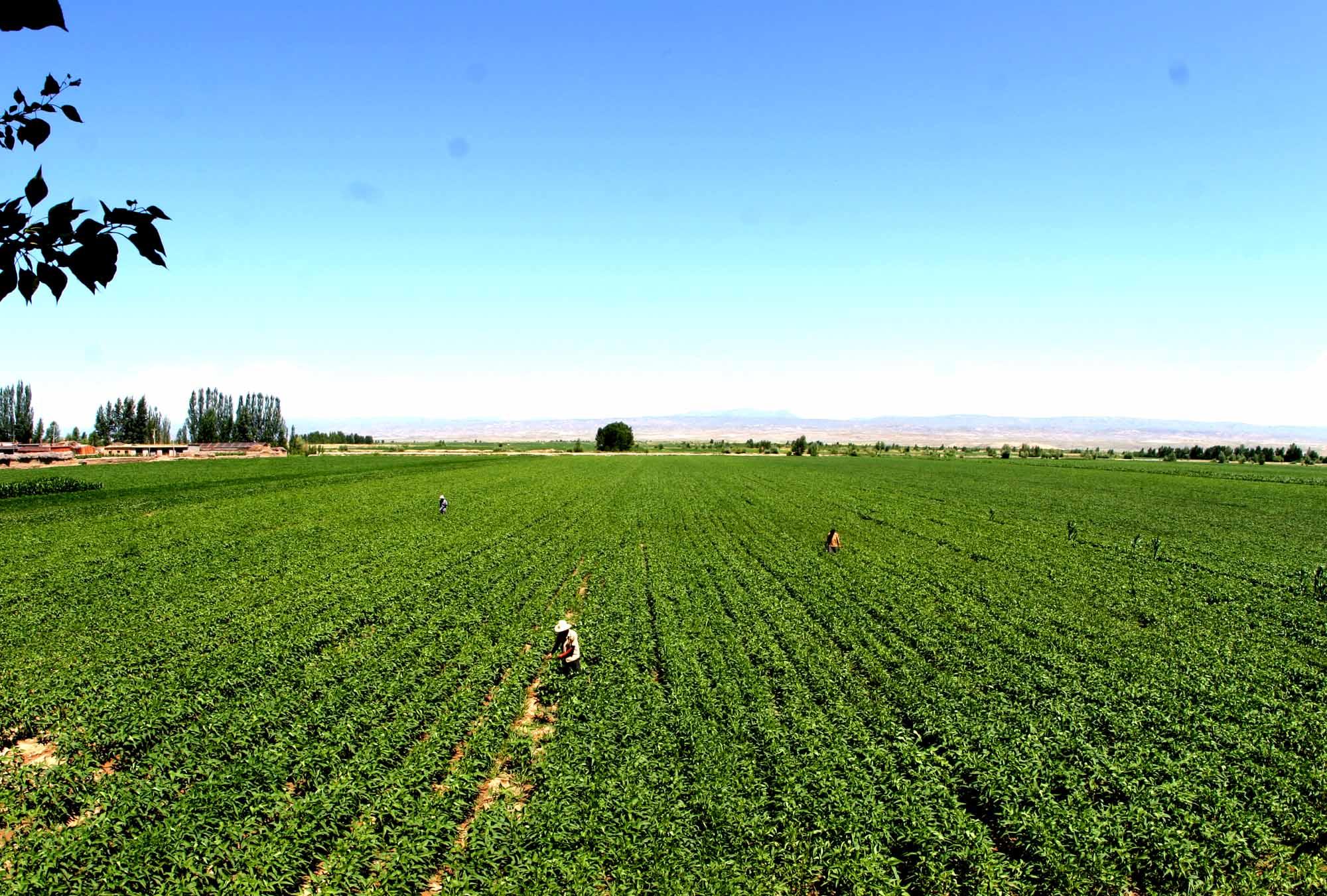 绿色 海南/海南五指山:发展生态农业保护生态促民增收