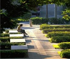 校园绿化,农村小学校园绿化,校园绿化方案